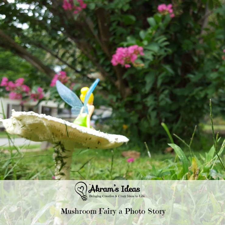 Akram's Ideas: Mushroom Fairy a Photo Story