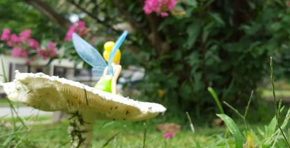 Akram's Ideas: Mushroom Fairy a Photo Story