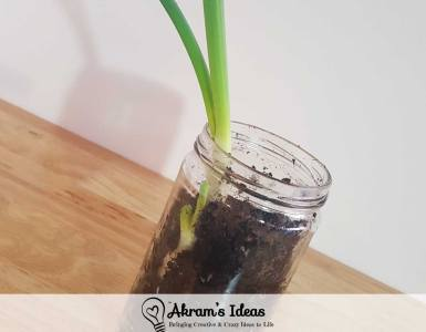 Akram's Ideas: Grow Your Own Green Onions From Scraps