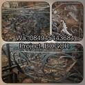 IMG_2755-4