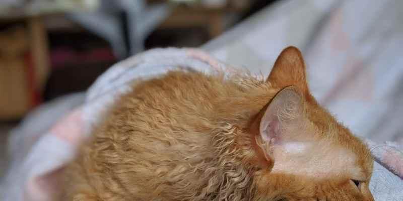 Portrait von Mecky, die auf meinem Bauch kuschelt. Sie liegt mit ihrem Kopf in Richtung mein Gesicht und schaut zur Seite.