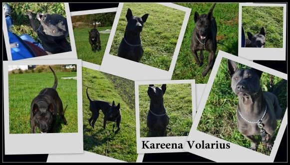 Kareena Volarius