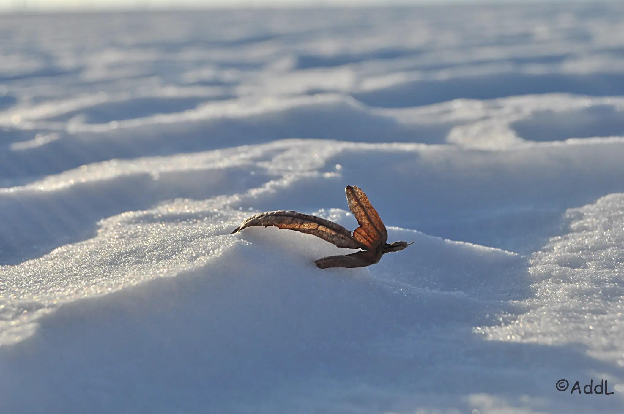 Blatt im Schnee.