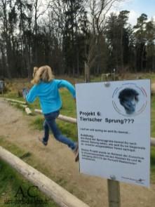 Projekt Tierischer Sprung im Hochwildschutzpark Rheinböllen