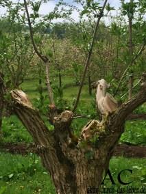... und Vögel auf Bäumen ;-)