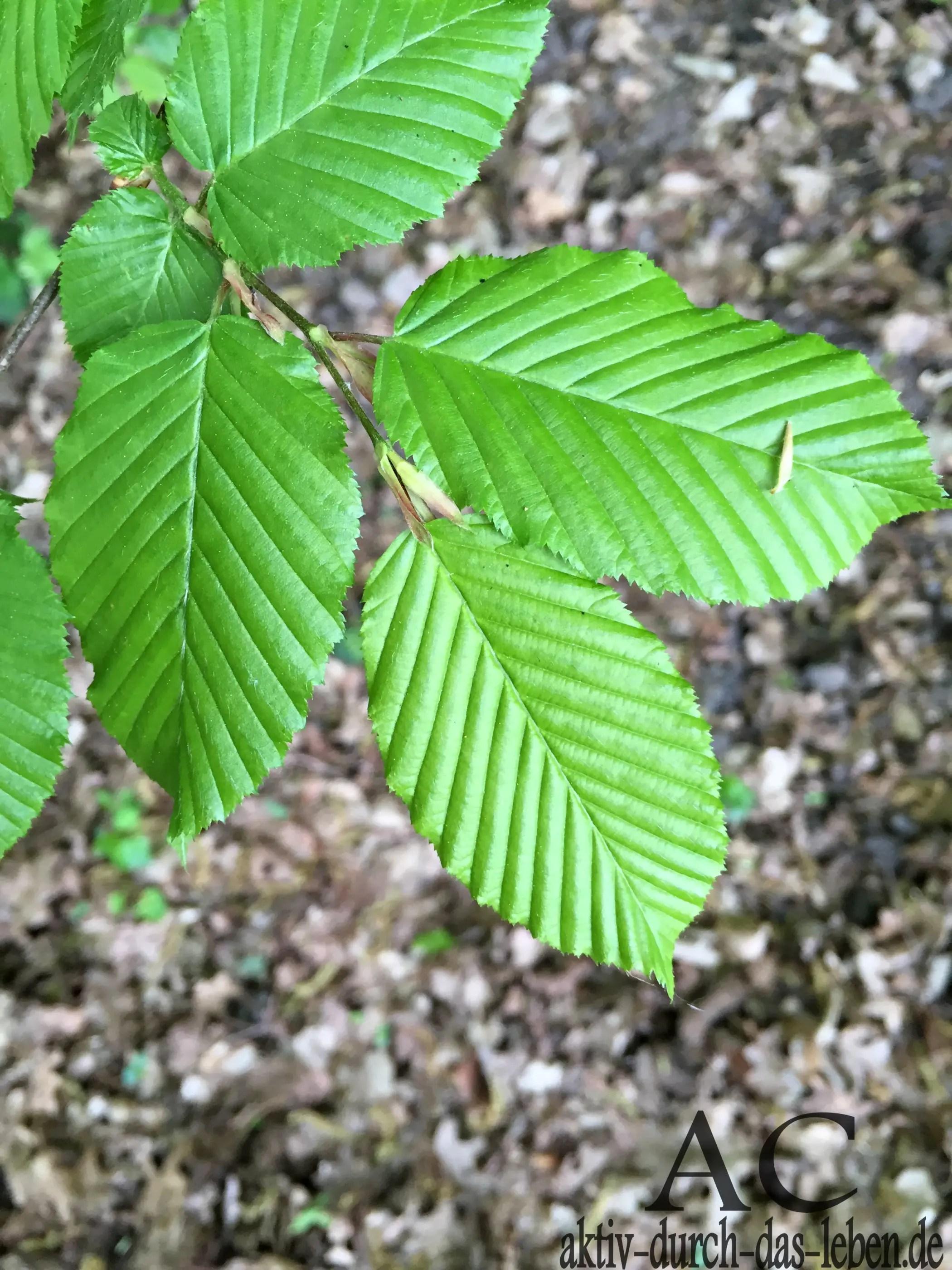 Geometrische Blätter. Die Natur schafft tolle Gebilde.