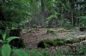 EinBlick in den Wald