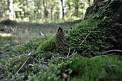Eröffnung der Traumschleife Rund um den Zauberwald