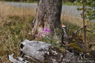 Trotz der Geschwindigkeit entdeckten wir einige Schönheiten im Wald
