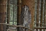 Besagte Verletzungen an einem Baum