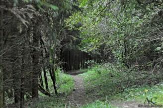 Saar-Hunsrück Steig bei Mörsdorf