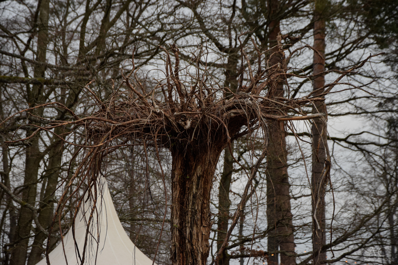 Baum-Kunst