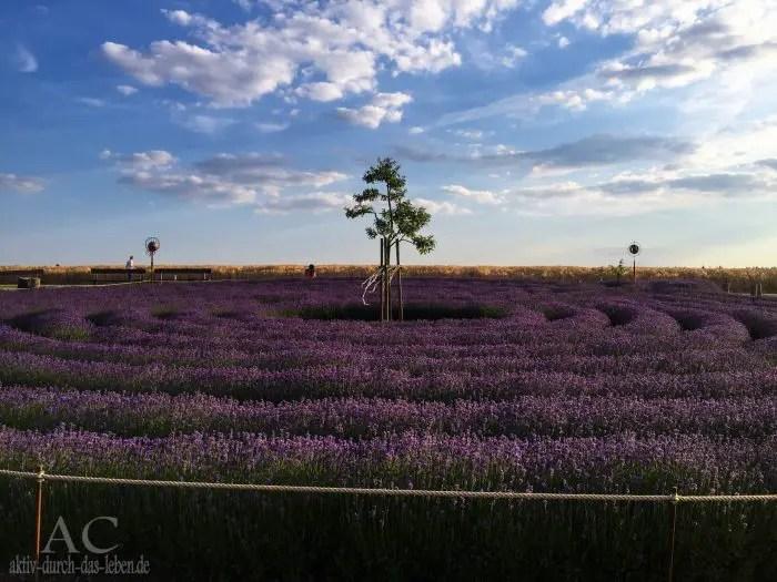 Lavendellabyrinth Kastellaun