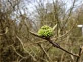 Erwachende Natur im Frühling