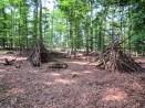 Schöner Wald und darin wurde sgar gebaut