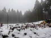 Schneeschuhwanderung Reinsfeld 20