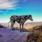 Dieser schöne Dalmatiner wartet obne auf seine Menschen