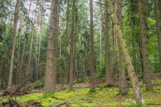 Auf dem Weg von Otterberg in die Mehlinger Heide durchwanderst du einen super schönen Wald
