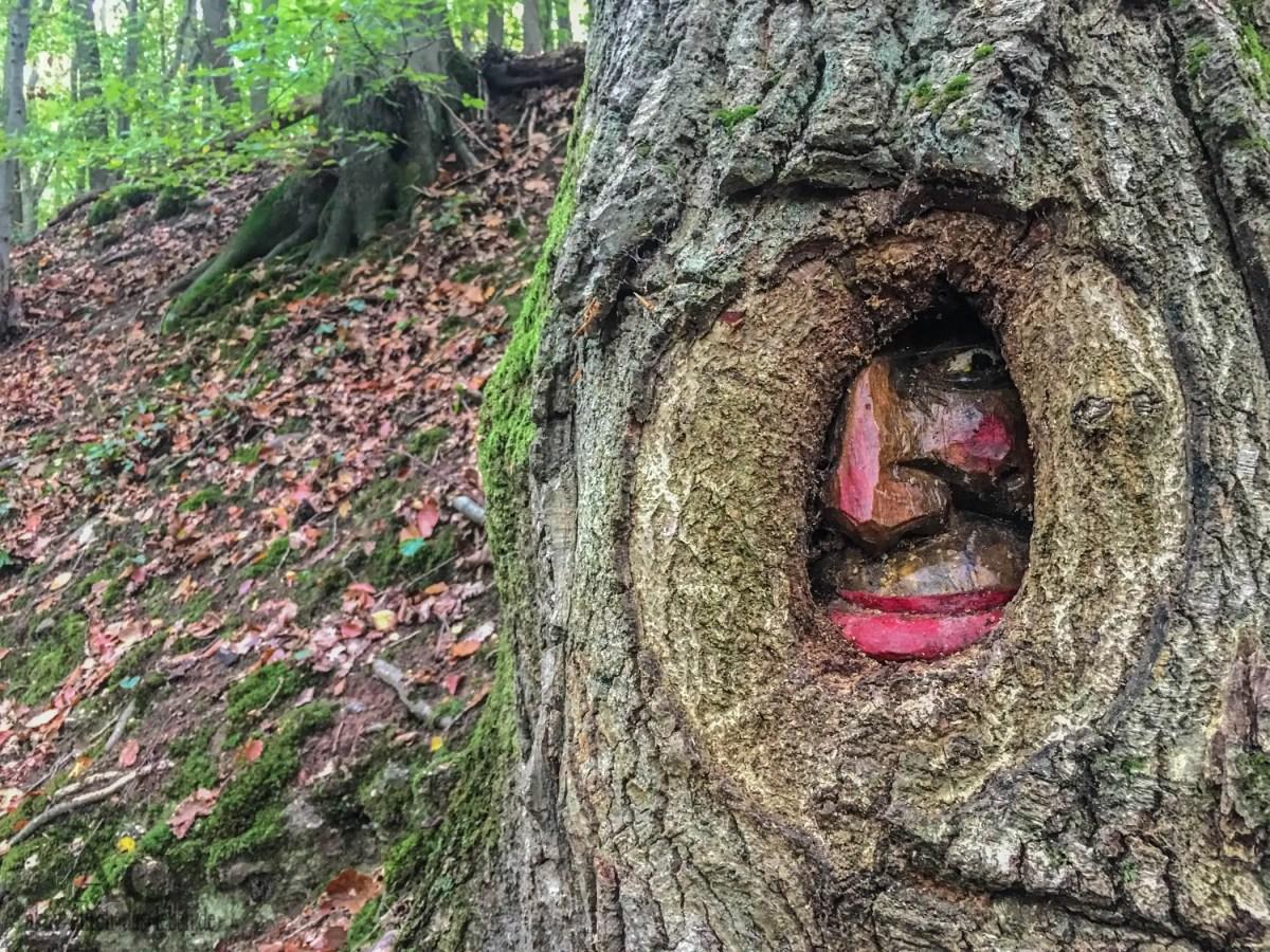 Die Steckeschlääferklamm im Binger Stadtwald - der Wald mit den Augen