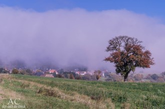 Der Nebel kommt angezogen