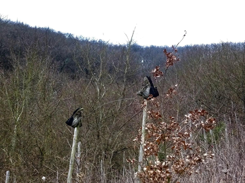 Schuhe im Weinberg