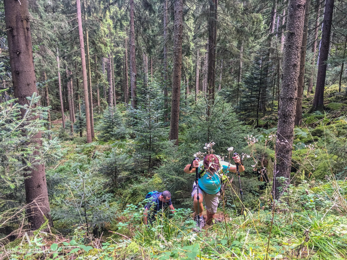 Albtal.Abenteuer.Track – Von Schweiß, Blut und Federweißer