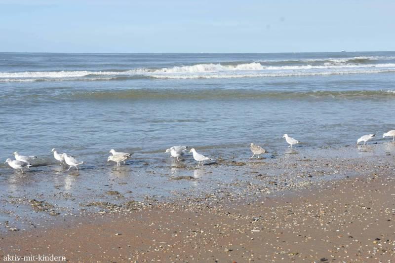 Möwen am Strand von De Haan