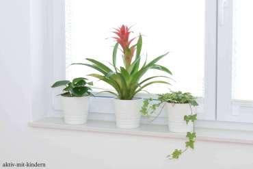 Pflegeleichte Zimmerpflanzen für Anfänger
