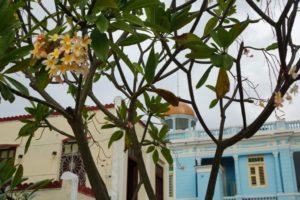 Λουλούδια στην Κούβα