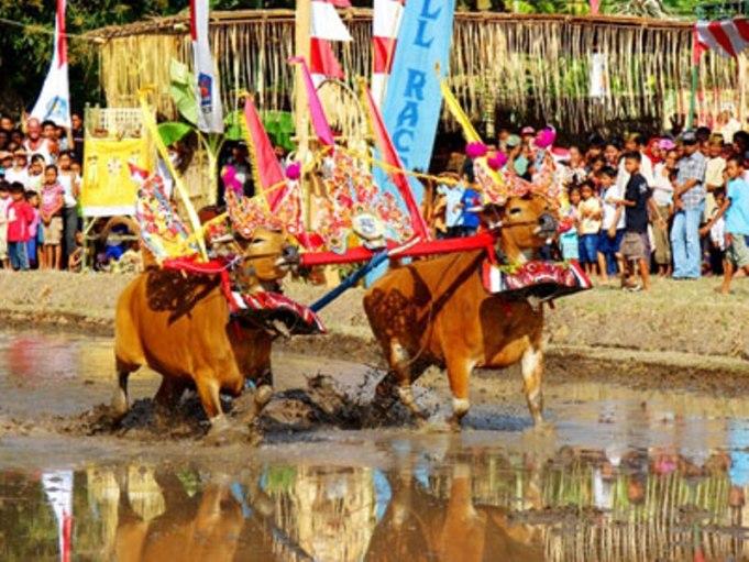 Festival Lovina Kembangkan Potensi Wisata Bali Utara