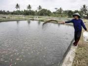 Warga memberi makan ikan di kolam air tawar - ANTARA/Hendra Nurdiyansyah
