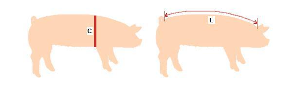 greutatea-porcului-fara-cantar