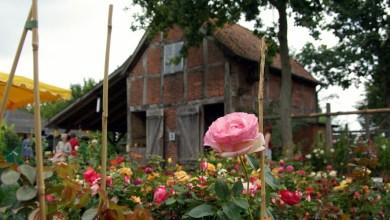 Photo of Schönes und Nützliches beim Rosenmarkt am Kiekeberg