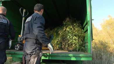 Photo of Drogenplantage auf Industriegelände im Hafen entdeckt