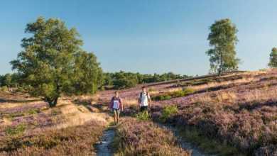 Photo of Der Heidschnuckenweg gehört zu Deutschlands  drei schönsten Wanderwegen