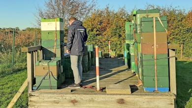Photo of Bienen vermisst? Polizei sucht rechtmäßige Eigentümer