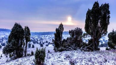 Photo of Der Heideweg bekommt 12 Schleifen