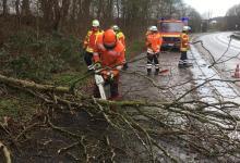 Bild von Weitere Sturmeinsätze forderten die Feuerwehren des Landkreises Harburg