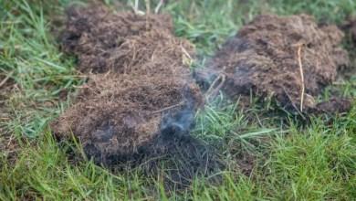 Photo of Rauchentwicklung auf Feld in Moorburg