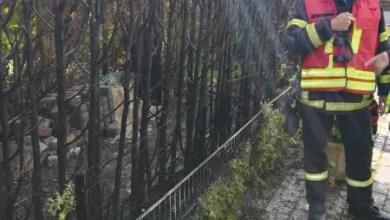 Photo of Statt Unkraut brennen Hecke und Gartenlaube
