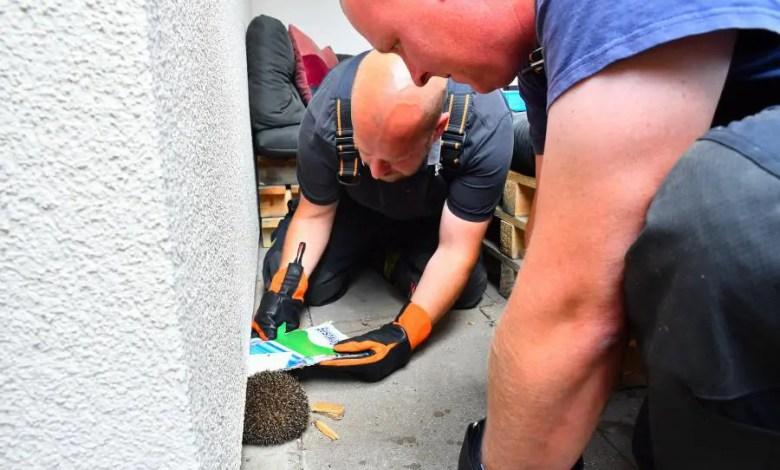 Bild von Freiwillige Feuerwehr rettet festgelaufenen Igel