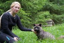 Photo of Schlauer Fuchs mit großem Herz im Wildpark Schwarze Berge