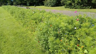 Photo of Blühwiesen zur Förderung der Artenvielfalt