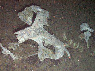 Balina Kalıntıları