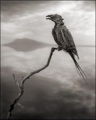 Ötücü Kuş