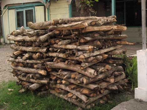 kayu jati setelah dipanen