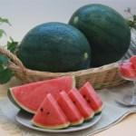 小玉スイカは大玉スイカが小さくなったものではなく、品種改良の新しい品種