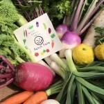 愛知県 田原市 畑をぐるっと収穫≫旬彩野菜バスケット3,800 円