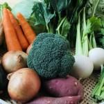 豊かな自然が育む季節ごとの新鮮な野菜。毎朝採れる野菜の中から7〜8種