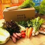 美作市 こどもの味覚を育む野菜セットM (野菜8種、卵10個)